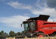 Forventningerne til årets hvedehøst i Europa nedjusteres. Arkivfoto: Morten Damsgaard
