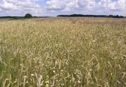 Flere alternative bekæmpelsesmidler er et skridt i den rigtige retning, mener Landbrug & Fødevarer. Foto: Agrofoto.