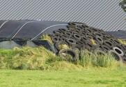 Dyrlægestuderende vil forbyde landmænd at bruge dæk til at holde plastik på plads med. Foto: Colourbox.