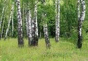 Danskerne er vilde med naturen. Foto: Colourbox.