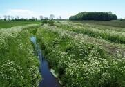 Afgrænsning af vandløb skal ske på et kvalificeret grundlag. Foto: Agrofoto.