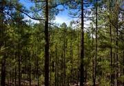 Skovbruget er gået til kamp for fortsat brug af biomasse som en forudsætning for flere træer i danske skove. Foto: Colourbox.