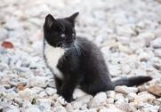 Endnu en gang bliver det foreslået at registrere danske katte. Forslaget er meget virkelighedsfjernt. Foto: Colourbox.