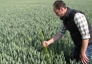 Der blæses til kamp mod italiensk rajgræs på Djursland. Pressefoto