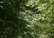 Mere privat skov skal mindske udledning af kvælstof i vandmiljøet. Foto: Agrofoto.dk