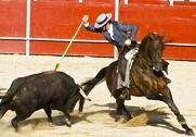 Hvor meget EU-støtte, der aktuelt går til opdræt af tyrekalve, som benyttes til tyrefægtning i specielt Frankrig, Portugal og Spanien? Arkivfoto: Colourbox.