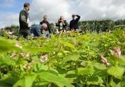 Økologirådgivning Danmark tilbyder gratis rådgivning til nye økologer. Pressefoto.