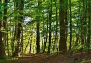 Skovrådet skal rådgive ministeren om skovbrugsfaglige og andre spørgsmål vedrørende skove. Foto: Colourbox.