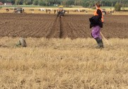 Martin Lindberg Velling i færd med sin afslutningsfure i stubjord. Foto: LandboUngdom.
