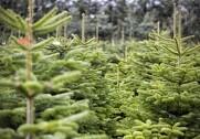 Nordictrees er kommet under HedeDanmarks vinger. Foto: Colourbox.