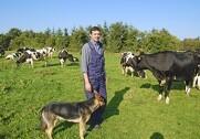 Torben Jensen havde aldrig før oplevet noget lignende, da alle hans godt 160 malkekøer blev syge på én gang. Goldkøerne, kvierne og kalvene gik fri.