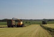 Forslag til lovændring gør det enkelt og endnu mere attraktivt at søge om genop-dyrkningsret på udvalgte arealer. Arkivfoto
