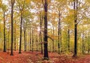 Skovloven er udskudt på ubestemt tid. Foto: Colourbox.