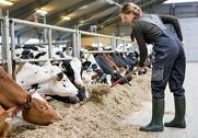 Det er positivt, at EU-Kommissionen endelig har forlænget kvægundtagelsen, men bekymrende at den kun er forlænget for to år, da det giver usikkerhed om landmændenes produktionsbetingelser. Det mener Landbrug & Fødevarer. Foto: Colourbox.
