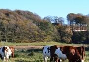Økologisk Landsforening står bag en konkurrence for landbrugsskolernes afgangselever. Foto: Colourbox.