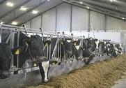Sektorbestyrelsen i Landbrug & Fødevarer, Kvæg, drager  rundt i hele landet for at få kvægproducenternes bud på, hvilke udfordringer erhvervet har og hvordan de bedst kan løses. Arkivfoto.