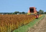 - Sidste år høstede vi et rigtig godt udbytte pr. hektar - i år desværre noget mindre på grund af vejret, så vi bliver nødt til at teste quinoa yderligere et år eller to, inden vi slipper produktionen helt løs, fortæller jordbrugsøkonom og MBA Steffen Lund, som de seneste to år har været forretningschef i Landbrug & Fødevarer, Business Lolland-Falster. Foto: Business LF