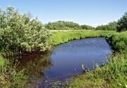 Fra 2018 kan man ikke længere få nye tilsagn om Økologisk Arealtilskud på arealer, der er registreret som § 3-arealer. Arkivfoto.