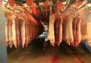 Samarbejdet i kødskandalen ophører efter Fødevarestyrelsen har bebudet en politianmeldelse i sagen. Foto: Jacob Hove.