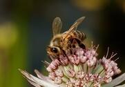 Flere bier skal der til. Foto: Colourbox.