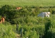 Rigtig mange landmænd har nu nået grænsen for deres indvindingstilladelse. Foto: Colourbox