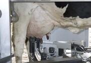 Arlas acontopris for økologisk mælk er uændret fra 1. februar 2019. Arkivfoto.