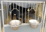 I et nye program forpligter alle gårde, der opdrætter kalve, sig til år efter år at mindske udledninger af drivhusgasser, samt en lang række andre krav til dyrevelfærd, medicinforbrug og socialt ansvar, skriver DC. Arkivfoto.