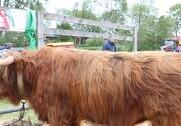 Præmien for skuets bedste tyr med 24 point gik fredag eftermiddag til indehaver Mogens Rasmussen. Foto: Marianne Nørmark.