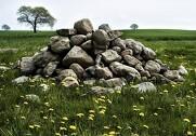 Jorden er dynamisk og forskellige processer rykker rundt på jord og sten og giver arbejde til landmændene, der nødigt vil have sten i mejetærskeren. Foto: Colourbox.