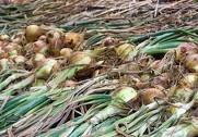 Sygdom og vejr giver usikkerhed om landbrugets priser. Foto: Colourbox.