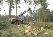 Et EU-udvalg lægger op til EU-tiltag, som blandt andet skal fremme sociale og miljømæssige hensyn i skovbruget, herunder turisme. Arkivfoto: Jens Frandsen.